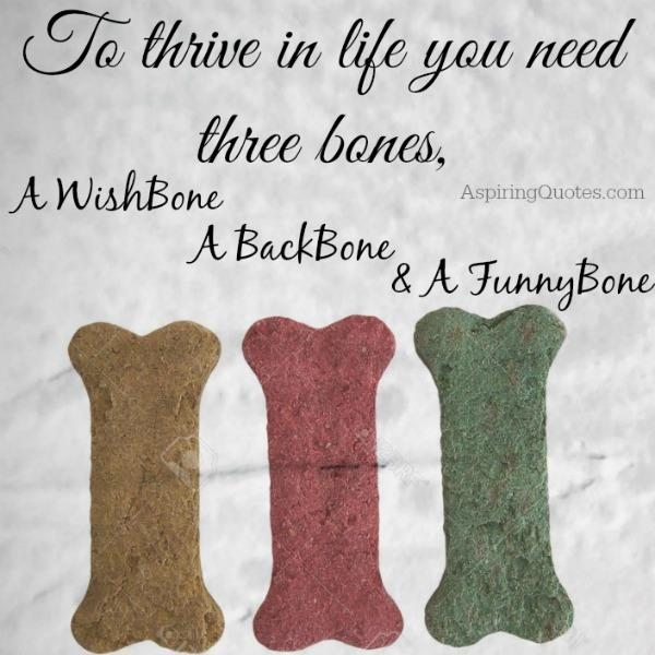 To thrive in life, you need 3 bones